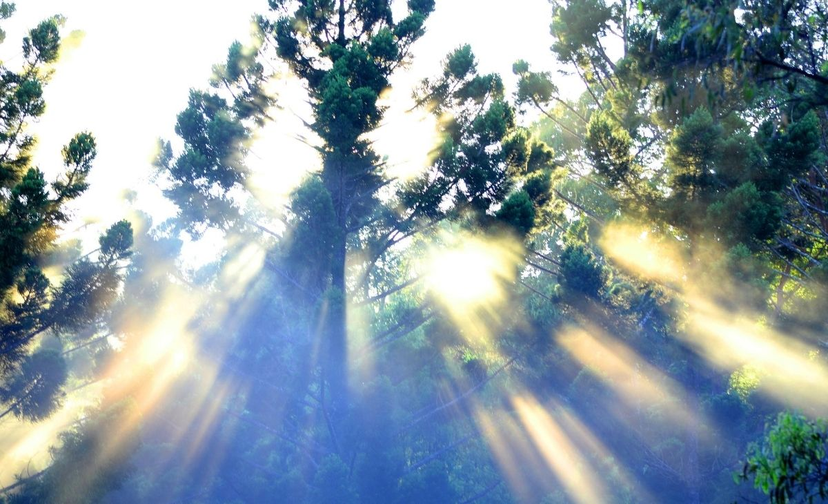 Sun rays through treetops - what is religion